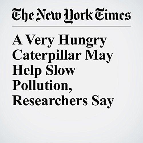 A Very Hungry Caterpillar May Help Slow Pollution, Researchers Say copertina