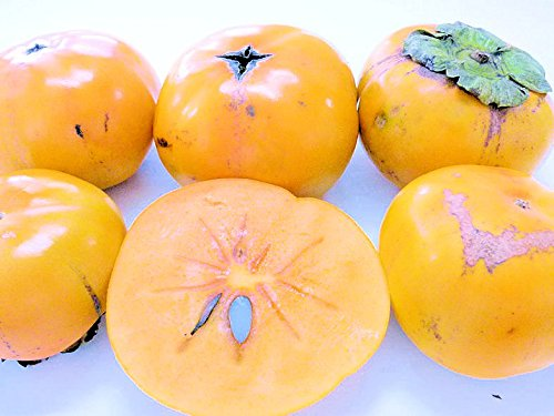 紀州田舎の小さな八百屋さん 【訳あり】カリッと美味しい次郎柿 3kg