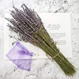 Dried Lavender Bundles, Total 250 Stems 100% Natural Lavender Flowers for DIY Flower Arrangements Home Party Wedding Decor