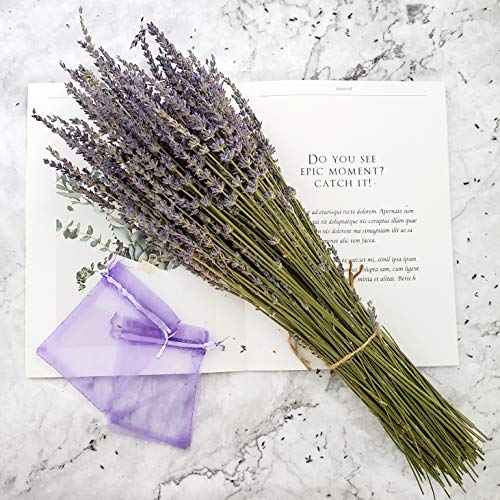 Dried Lavender Bundles, Total 250 Stems 100% Natural Lavender Flowers for DIY Flower Arrangements Home Party Wedding Decor