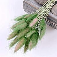 JPSSYXLCC 50ピースナチュラルドライフラワーブーケ結婚式家族イースター装飾ウサギ尾草リアルフラワー (Color : 渐变绿)