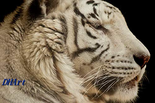 DHArt 1000pc Jigsaw Puzzles for All Ages White Tiger Close Up Educational Decompression Games