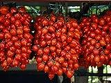 Plentree Las semillas de tomate Piennolo del Vesubio italiano de la herencia orgánica Nongmo...