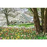Fondos de fotografía escénica de árboles de pastizales de jardín de Primavera Natural Fondos fotográficos Personalizados para Estudio fotográfico A12 3x3m