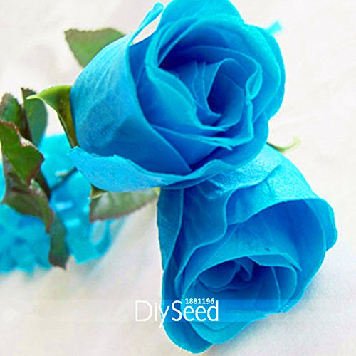 Grosses soldes! 50 Pièces / Sac, New Rosen Samen Blue Rose Seeds Gothic Gardenin, # AQ7EGI