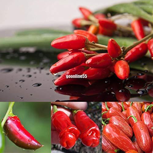 Portal Cool Pimienta Roja Mexicana: Semillas perenne Bonsai chile suculentas plantar semillas Vegetable Seeds EA9