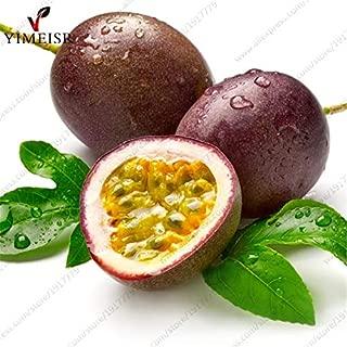 WANCHEN Purple Passion Fruit(Passiflora edulis) Seeds,Rare Tropical Edible Fruit Seeds Organic Fruit Tree Seeds for Indoor plant10pcs/bag