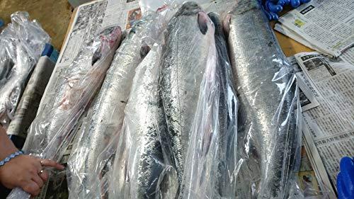 北海道/秋鮭(さけ)生(朝どれ)4.5kg-4.9kg脂の乗った雄鮭(銀毛)【急速冷凍】