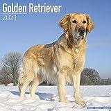 Golden Retriever 2021 Wall Calendar (Square)