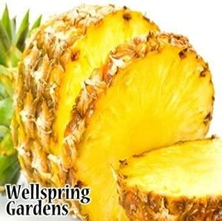 PINEAPPLE Elite Gold - Ananas comosus LIVE FRUIT PLANT Fruit