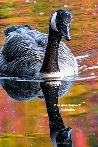 Das quackquack  Kalender: Enten schwimmen im See