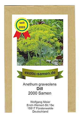 Dill - Bienenweide - Anethum graveolens - 2000 Samen