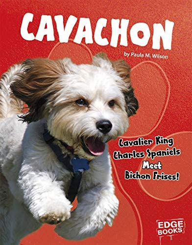 Cavachon Cavalier King Charles Spaniels Meet Bichon Frises Top Hybrid Dogs product image