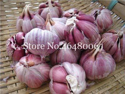 Bloom Green Co. Grosses soldes! 100 Pcs vert Ail pur Bonsai sain Bonsai organique naturel et délicieux légumes Piquant épices Plante Assaisonnement: g