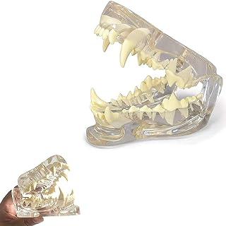 病理医歯犬顎モデル、獣医Officeのデントオーラル病理解剖犬の教育ツール