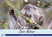 Der Biber, ein guter Bauhandwerker (Wandkalender 2022 DIN A4 quer): Ein schoene Begegnung mit einem, der nur nachts unterwegs ist. (Monatskalender, 14 Seiten )