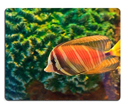 Liili Mauspad Naturkautschuk Mousepad Anemonenfisch in das Aquarium der Rayong (Provinz) Thailand Bild-ID 19116566
