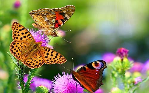 DSJDSFH DIY Ölgemälde Digitales Ölgemälde Handgemalte Schöne Schmetterling Einzigartige Moderne Geschenk Dekoration Kunst 16 X 20 Zoll Rahmenlos