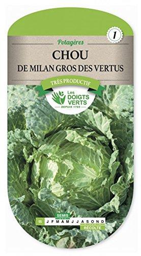 Les doigts verts Semence Chou de Milan Gros des Vertus