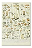 Mushrooms, B, Vintage Bookplate, Adolphe Millot Artwork 82068 (19x27 Premium 1000 Piece Jigsaw Puzzle for Adults, Made in the USA!)