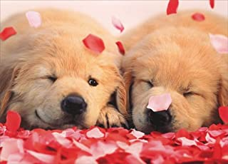 2 Puppies with Rose Petals Golden Labrador Retriever Valentine's Day Card