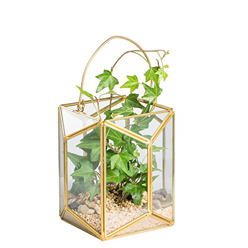 Geometric glass terrarium flower pot