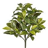 wohnfuehlidee Kunstpflanze Gewürzlorbeer, 2er Set, Farbe grün, Höhe 36 cm