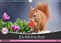 Eichhoernchen Momentaufnahmen fuers Herz (Wandkalender 2022 DIN A4 quer): Wunderschoene Grossaufnahmen entsprechend der jeweiligen Jahreszeit (Monatskalender, 14 Seiten )