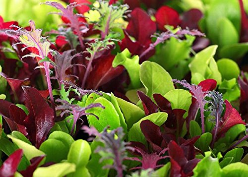 This is a Mix!!! 2000+ Seeds Microgreens Mix 40 Varieties - About 1 oz. - Superfood Seeds Heirloom...