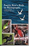 Puerto Rico s Birds in Photographs: An Illustrated Guide Including the Virgin Islands, 4th Edition