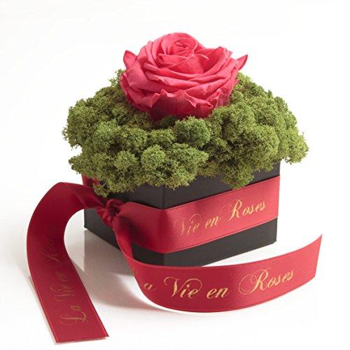 Rosemarie Schulz konservierte Blumen und Rosen, schwarze Flowerbox mit Infinity Rose in Pink-Rot und konserviertem Islandmoos haltbar 3 Jahre (12 x 12 cm, Pink-Rot)