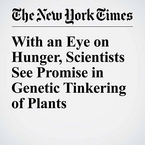 With an Eye on Hunger, Scientists See Promise in Genetic Tinkering of Plants audiobook cover art