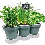 Pilix Maceta para hierbas de cocina, arena/pardo, 2 piezas, jardín de hierbas, balcón, macetas de plástico, jardinera de ventana