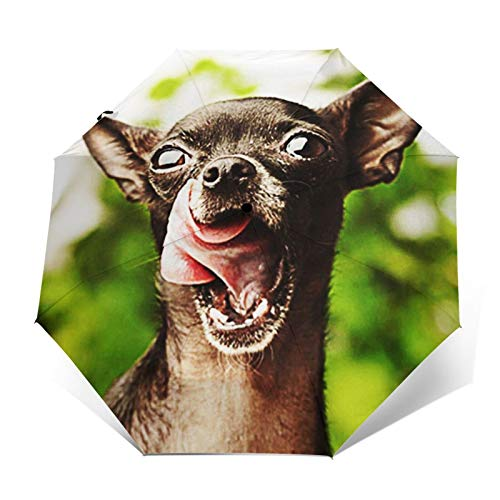 Paraguas Plegable Automático Impermeable Perro Chihuahua Cachorro, Paraguas De Viaje Compacto a Prueba De Viento, Folding Umbrella, Dosel Reforzado, Mango Ergonómico