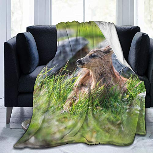 Colorful products Fleece Blanket 50'x 60' - Fawn Cub Muzzle Lies Home Flannel Fleece Soft Warm Plush Throw Blanket for Bed/Couch/Sofa/Office/Camping