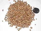 50 Semilla de Juniper Bonsái chino Paquete Juniperus chinensis