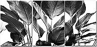 壁のプリント3ピース60x80cmフレームなしブラックホワイトウォールアート植物バナナの葉絵画熱帯ヤシの葉ポスター北欧の壁の写真