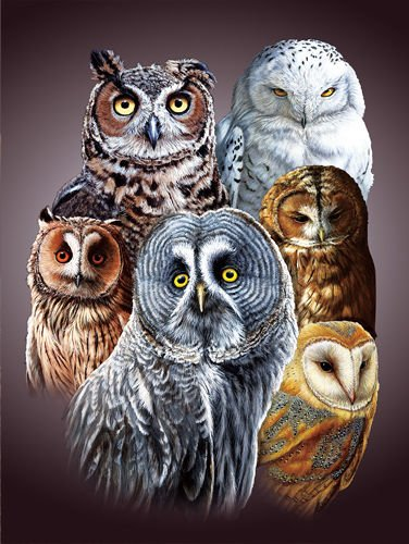 TripStan 3D Home Wall Art Decor Lenticular Pictures, Owls Collection Holographic Flipping Images, 12x16 inches Animal Poster Painting, Without Frame, Cute Owls