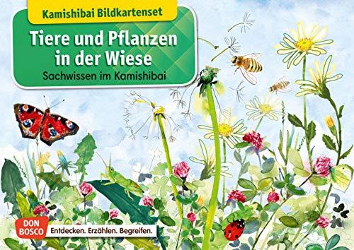 Tiere und Pflanzen in der Wiese. Kamishibai Bildkartenset. Sachwissen im Kamishibai. Mit dem Erzähltheater Sachunterricht in der Grundschule lebendig ... Sachwissen. (Sachwissen für das Kamishibai)