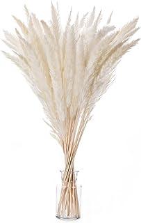 LUOWAN Herbe de la Pampa Séchées Décoration Lot de 30, Phragmites Communis décoration,Fleur de Pampa 55cm pour la Décorati...