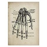 zaishuiyifang Lienzo De Pintura, Carteles E Impresiones, Anatomía Humana, Anatomía Médica, Ciencia, Arte De Pared, Decoración del Hogar, Pintura Colgante Sin Marco B1342 50X70Cm