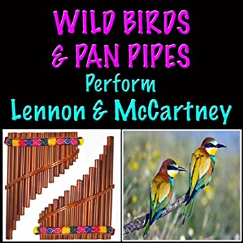 Wild Birds & Pan Pipes Perform Lennon & McCartney