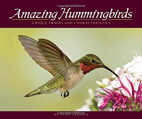 Image OfAmazing Hummingbirds: Unique Images And Characteristics (Wildlife Appreciation)