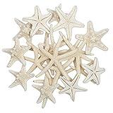 Jangostor 20 PCS 2-6 Inch Starfish Mixed Ocean Beach Starfish-Natural Colorful Seashells Starfish Perfect for Wedding Decor Beach Theme Party, Home Decorations,DIY Crafts, Fish Tank