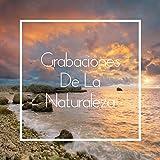 Grabaciones De La Naturaleza - 100% Puros Sonidos De La Naturaleza Para Dormir, Relajarse, Descanso, Calmarse