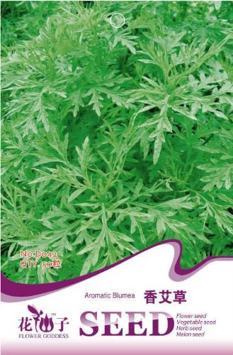 Blumea balsamifera Samen, 50pcs / bag Zitronenduft Fragrant Wormwood Indoor Bonsai Blume Pflanze Blumensamen