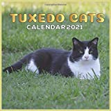 Tuxedo Cats 2021 calendar: Wall Calendar, Animals Cats Monthly Calendar