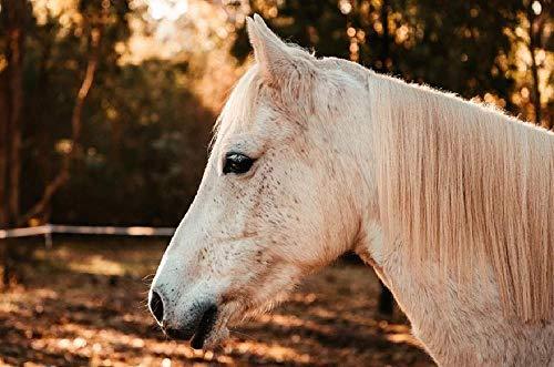 nobrand DIY Steuern Dekor Digitalen Leinwand Ölgemälde Von Nummer Kits - Pferd Pony Australisches Pony Grau