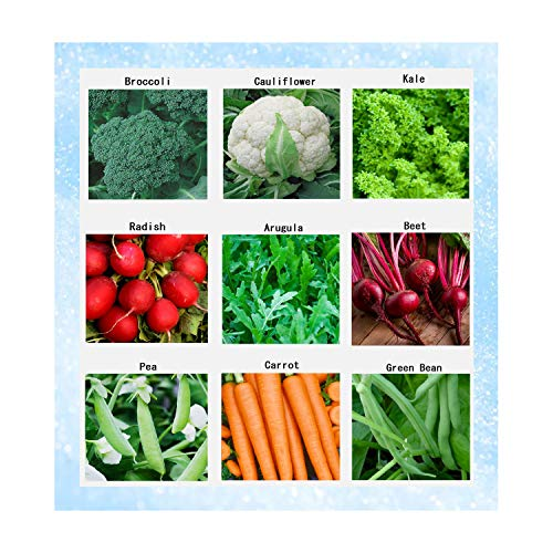 Premium Winter Vegetable Seeds Collection Organic Non-GMO Heirloom Seeds Radish, Pea, Broccoli, Beet, Carrot, Cauliflower, Green Bean, Kale, Arugula, Gardner and Chef Favorites
