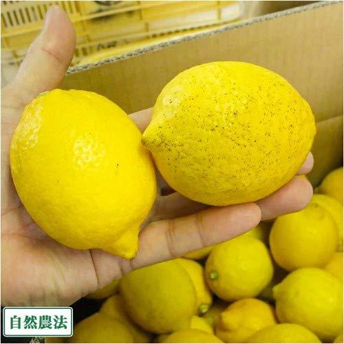 道谷農園『レモン5kg自然農法』
